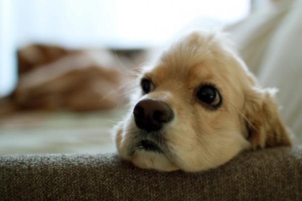 肘掛けを活用する犬